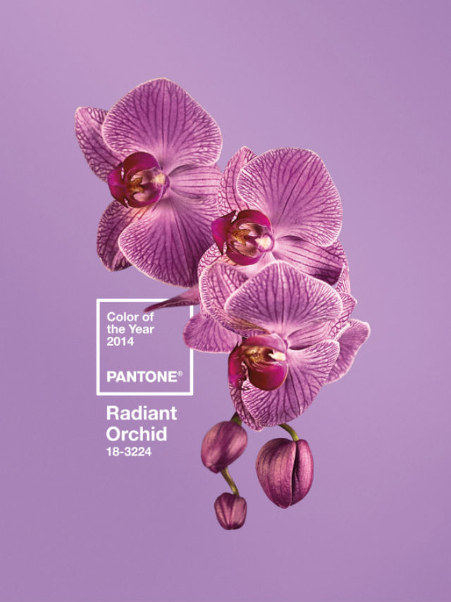 radiant orchid - 20140104